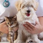 cat-dog-checkup